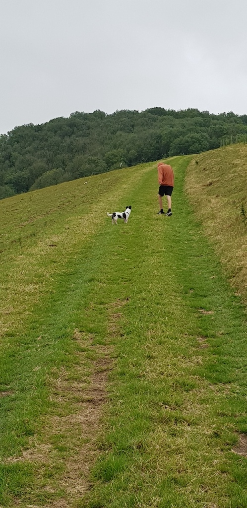 boy and dog walking in the countryside